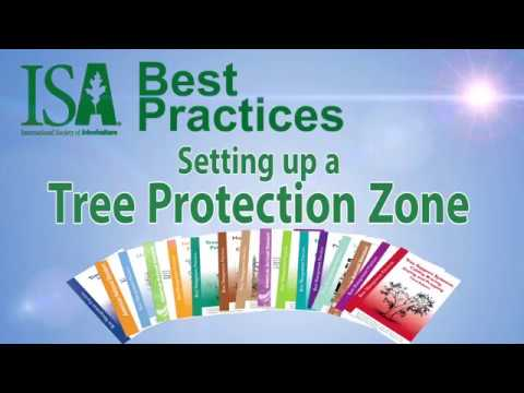 Best Practices - Setting Up a Tree Protection Zone