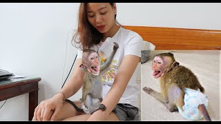 Oh!!! Monkey Sam suck the milk and bite the mom nipple, sam lay rolling and crying