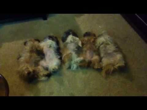 Five little dogs in a row...