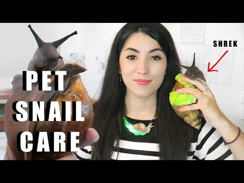 Giant African Land Snail CARE | Snail Care Tutorial | How To Care For Snails