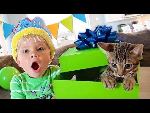 BIRTHDAY KITTEN SURPRISE! - Ollie's 3rd Birthday Special