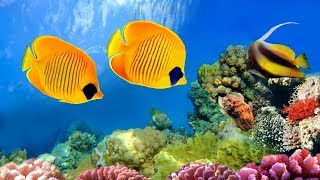 Download CORAL REEF AQUARIUM COLLECTION 「24/7」 🔴 Relaxing Music for Sleep, Study, Yoga & Meditation Video