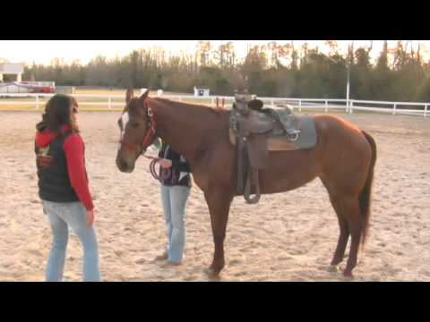 Horse Breaking Techniques