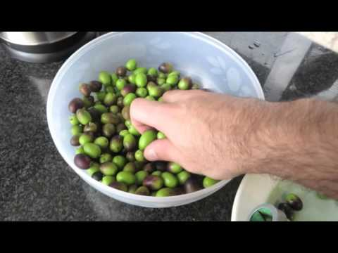 curing olives curtir azeitonas زيتون