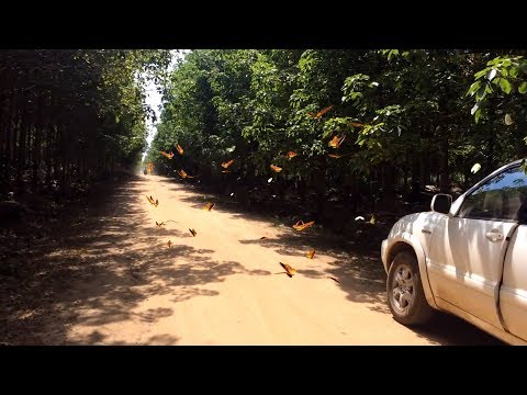 Butterfly Street at Namlea mountain in Cambodia