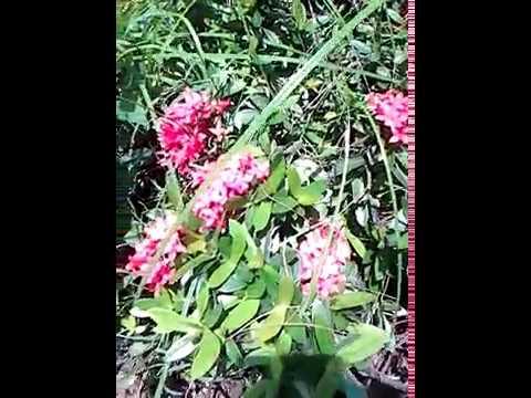 Common Wild Flower