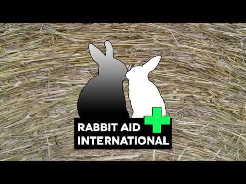 Myxo Petition Australia - (no distressing pictures) -  Rabbit Aid International