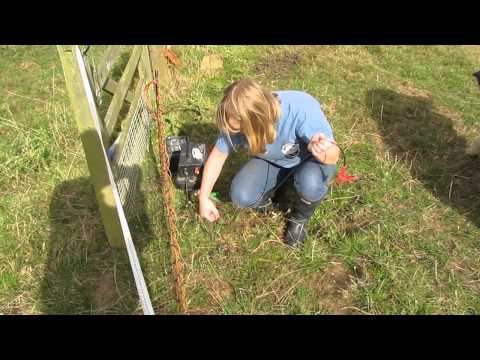 How to put up Electric Netting for Pigs part 2