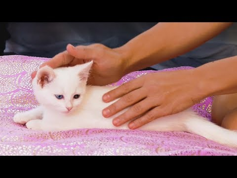 Baby Kitten Massage Tutorial & How Cute Animals Reduce Stress, How to Massage Cats & Kittens