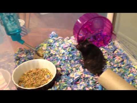 New hamster Bin Cage