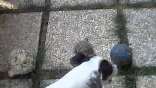 Turtle and Dog Play With a Ball