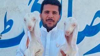 Karachi goat farm Mohammad Sabir Rajan Puri birthday Bakri aur Bakre
