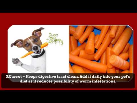 7 Natural Dog Worming And Cat Treatment