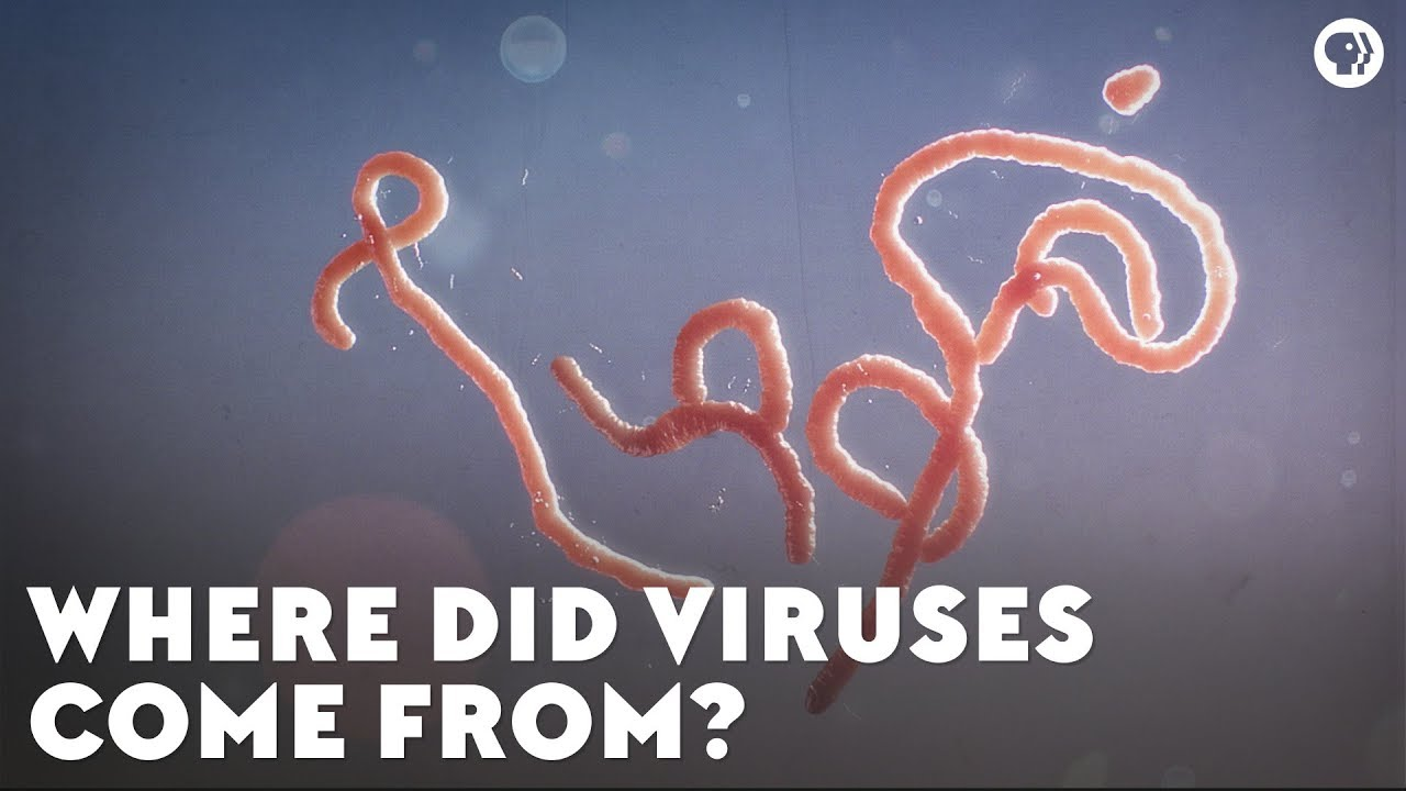 Where Did Viruses Come From?