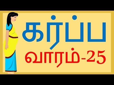 Pregnancy   Tamil   Week by Week   Week 25   வாரம் 25