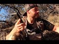 I found a DEAD HOUND DOG!!