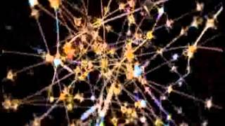 01 - the great mysteries of the human brain
