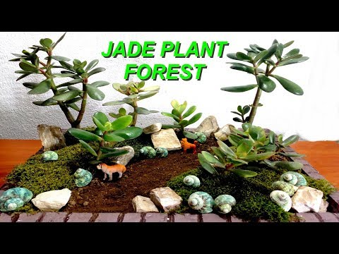 How to make mini Jade Plant Forest