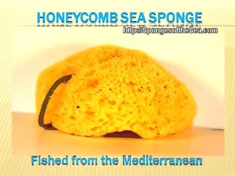 Natural Sea Sponges - High Quality Sea Sponges We Carry