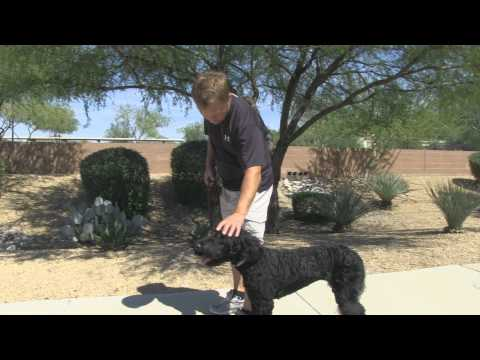 Tips for Mastering the Dog Walk