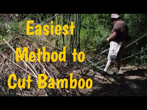 Easiest Way to Cut Bamboo
