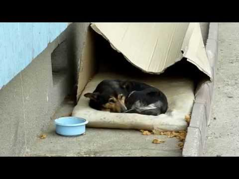 The Life of a Homeless Street Dog - HOWL OF A DOG Rescue Video