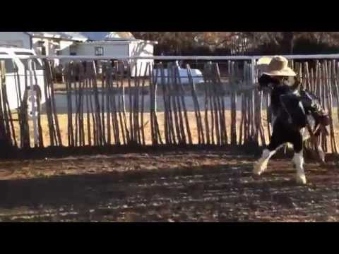 Trace Barrett (7), doing a little roping practice on Spanky.