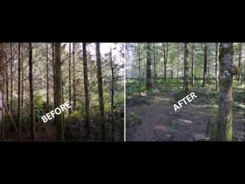How Our Yard turns into Hiking Trails  (Area 1-  Front Forest)