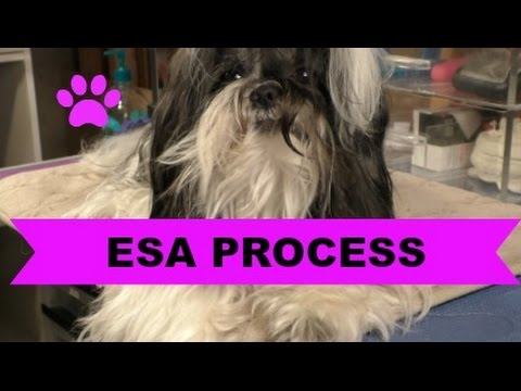 My ESA Process