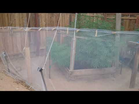 Eliminate Budworm Caterpillars from your Cannabis Grow with Shade Cloth