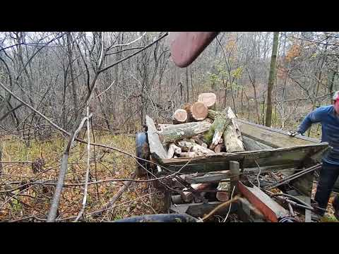 cutting wood, filling a former manure spreader full of oak wood
