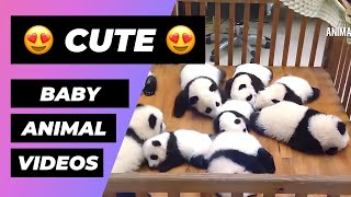 Baby Animals 🔴 Funny and Cute Baby Animals Compilation - Lindos y Adorables Animales Bebés Vídeos