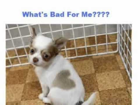 feeding diabetic dogs