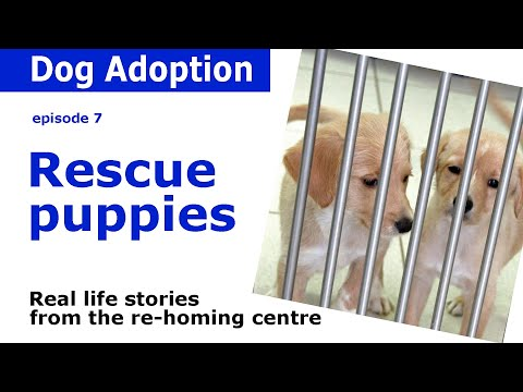 Rescue Puppies | Stories and advice from Dogstrust | Episode 7