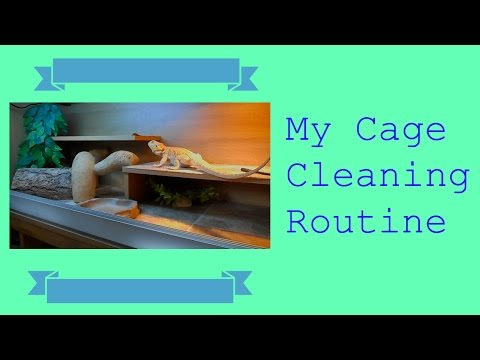 How to Clean out your Bearded Dragon's Vivarium!