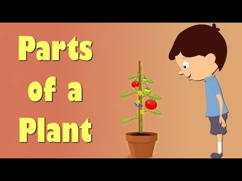 Parts of a Plant | Videos for Kids | It's AumSum Time