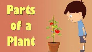Parts of a Plant | Videos for Kids | #aumsum #kids #education #science #plants