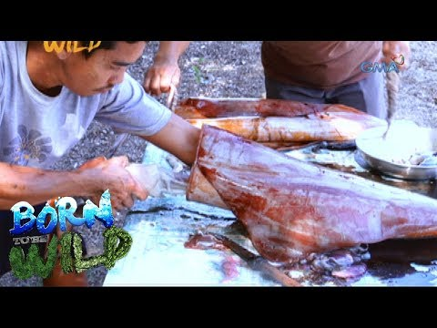 Born to Be Wild: Overfishing threatens survival of giant squids in Marinduque