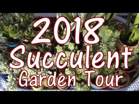 2018 Succulent Garden Tour & Propagation Tips