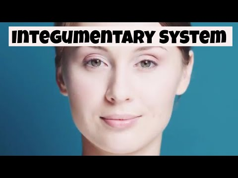 Why the integumentary system is important? Skin,nails, and hair)