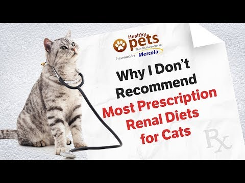 Why I Don't Recommend Most Prescription Renal Diets for Cats