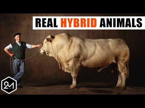 10 Bizarre Hybrid Animal You Wont Believe Actually Exist