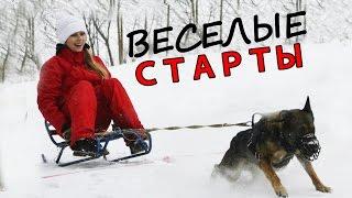 Соревнования с собаками по буксировке санок, надувного круга (таблетки) мн. другое