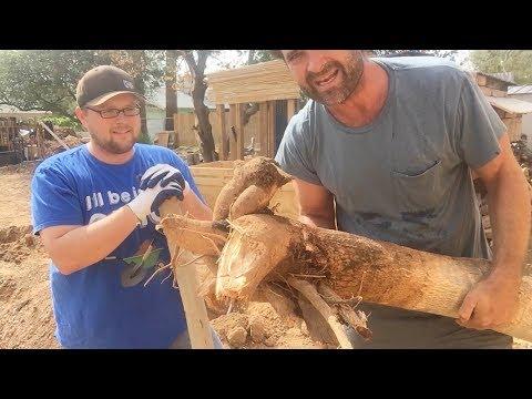 Ep154 - Planting Honolulu and Kaui, 2 Moringa trees from Craig's at Stonehaven