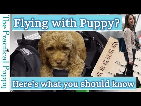 How to Fly with a Puppy in an Airplane