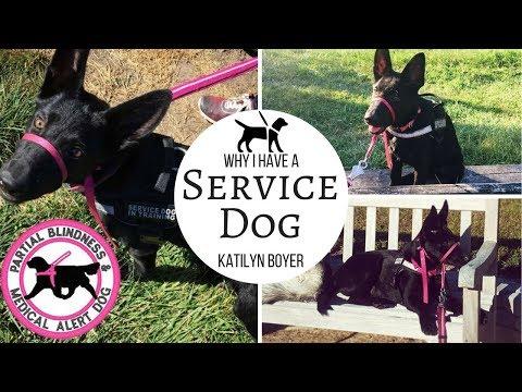 Why I have a service dog 😱| I'm half blind 🤒 | Katilyn Boyer