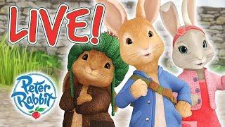Peter Rabbit | Rabbit Loves Radishes - Livestream