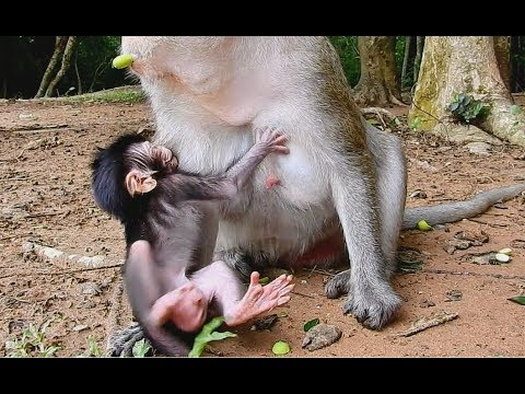 Newborn baby Giant face start learn to walk sharking body | mom take care so much hug in chest.