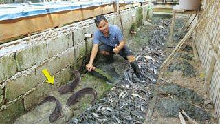 Amazing Native Catfish Harvest - Harvesting more than 150 Kg of Catfish│Catfish Farming business