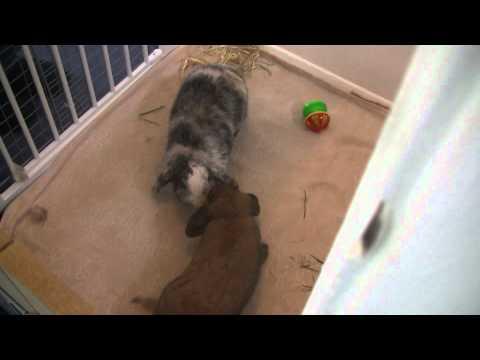 Bunny Bonding- 1st Meeting